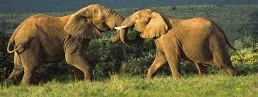 Game hunting in South Africa contact 071 040 2433