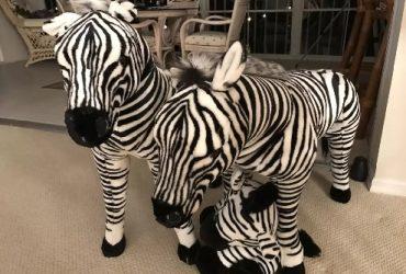 Giant Zebra