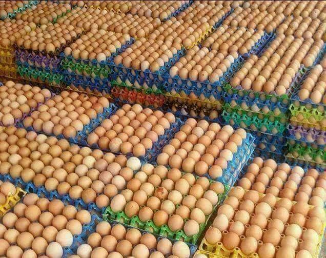 Washed Fertile and Fresh Table Chicken Eggs for Sale best prices