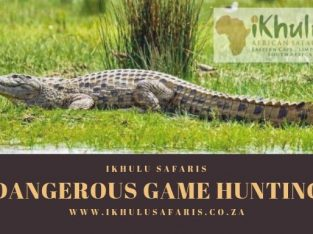 Dangerous Game Hunting New Offers