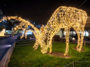 Joburg Zoo Festival of lights and night market: A