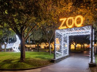 Joburg Zoo Festival of lights and night market