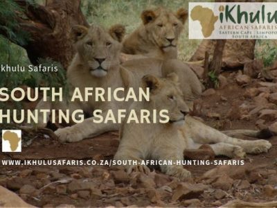 South African Hunting Safaris Cost