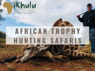 African Trophy Hunting Safaris