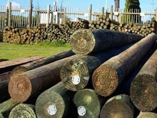 stellenbosch poles