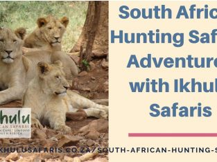 South African Hunting Safaris Adventures