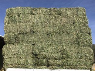 Grade A Lucerne Bales for sale whatsapp +276315219