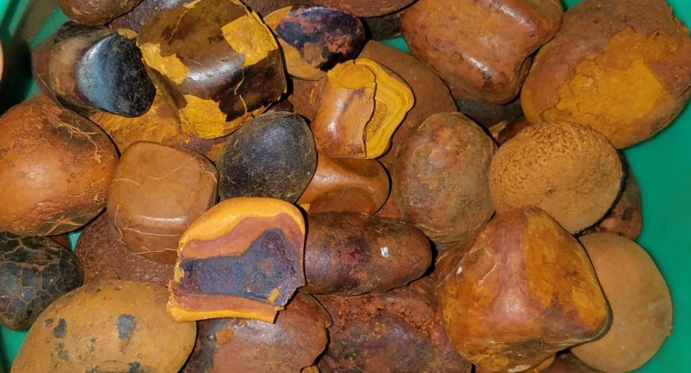 Where to buy OX GALLSTONE online