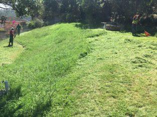 Garden service – Overgrown lawn SPECIAL