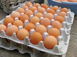 Best Quality Organic Fresh Chicken Table Eggs