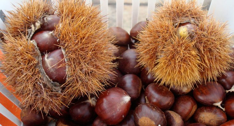 Chestnuts For Sale