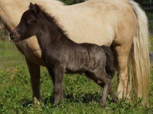 Horse for sale whatsapp +27734531381