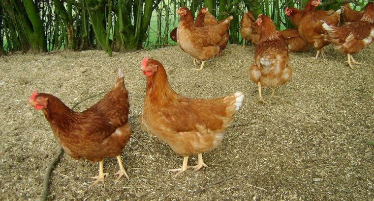 Affordable & reliable livestock supply