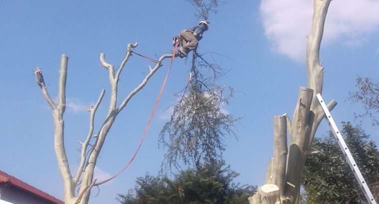 EPDS TREE SERVICE