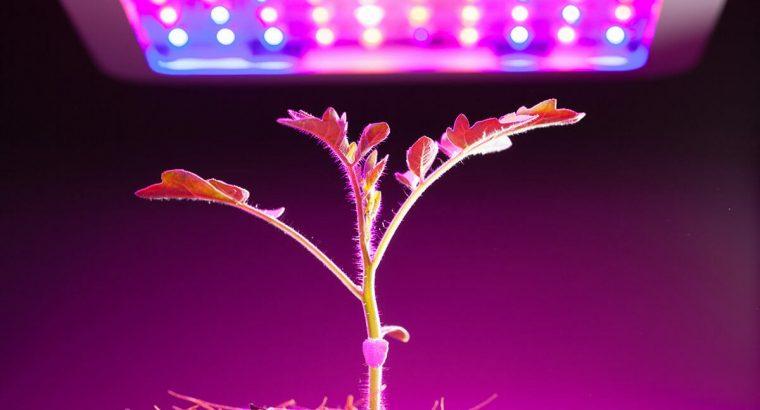 Best Indoor Plant Lighting at Grow Guru