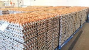 Fresh Brown and White Farm chicken Table eggs